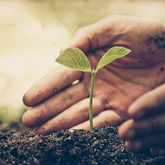 Cérès, encadrement de chantier d'espaces verts, d'espaces naturels, de végétalisation