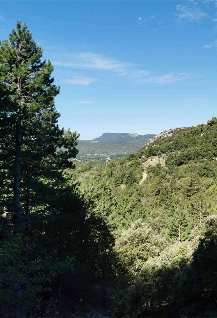 Cérès Flore, prélèvement de végétal local en millieu naturel