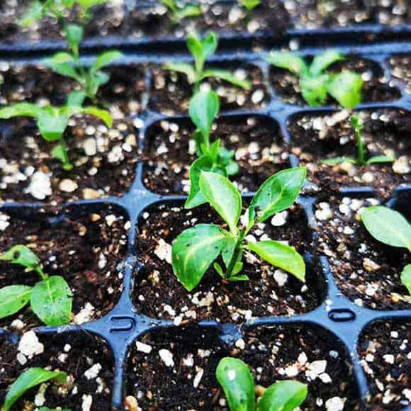 Cérès, unité de production de végétaux locaux