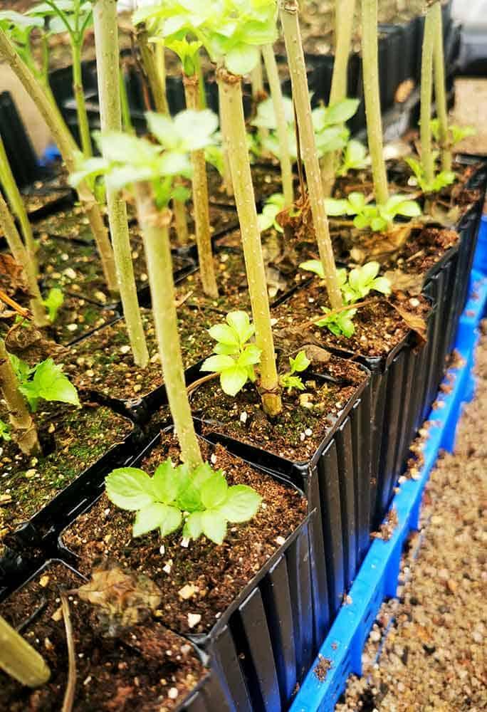 Cérès, multiplication et élevage de végétal local